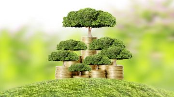How You Can Grow Your Own Money Tree And Never Worry About Money Again