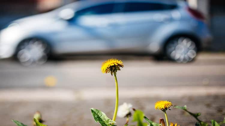 hybrid car and dandelion